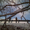 Ice storms and co.